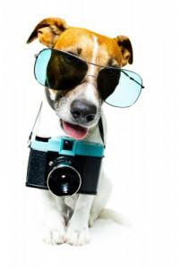Wie finde ich die Richtige Digitalkamera, die zu mir passt?