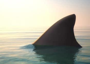 Die 5 aufregendsten Hai Spiele für mobile Endgeräte 5